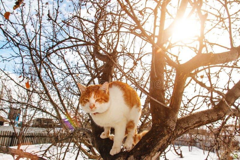Chat de ressort sur l'arbre images libres de droits