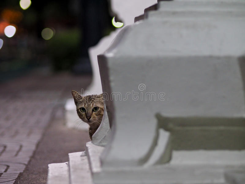 Chat de rue de Bangkok photographie stock libre de droits