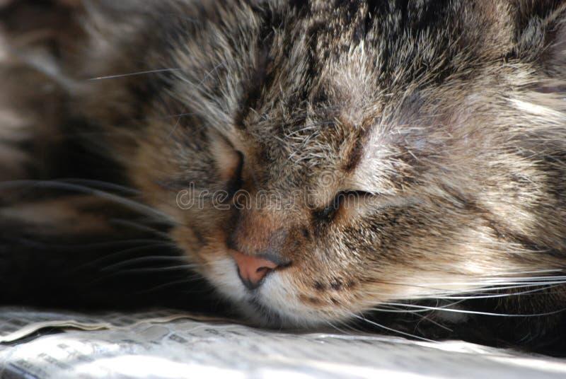 Chat de sommeil à la maison à la lumière du soleil images libres de droits