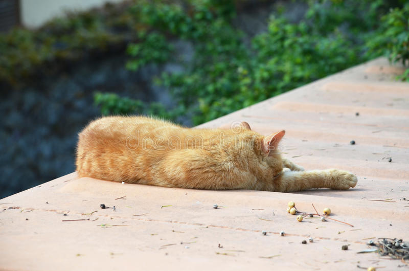 Chat de sommeil, Istanbul, Turquie images stock