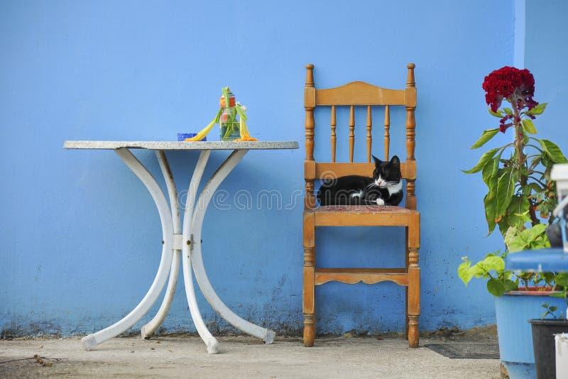 Chat de sommeil sur la chaise sous le mur bleu image libre de droits