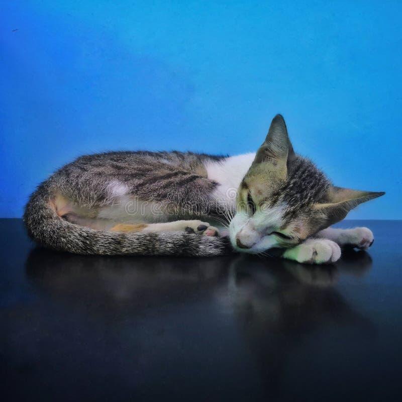 Chat de sommeil sur la table photo libre de droits