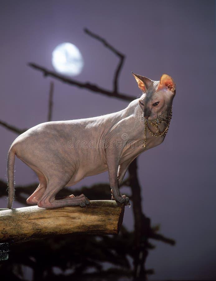 Chat de sphinx avec une lune illustration de vecteur