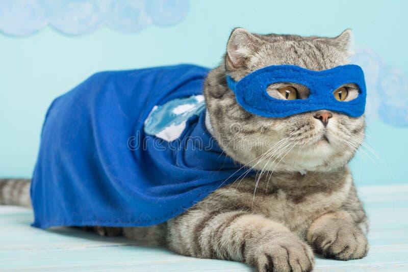chat de super héros, Whiskas écossais avec un manteau et un masque bleus Le concept d'un super héros, chat superbe, chef image stock