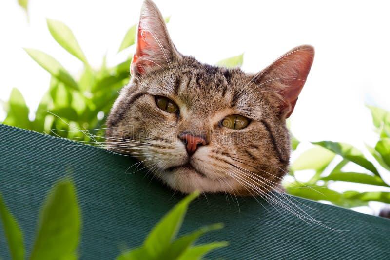 Chat de Tabby dans le jardin images stock