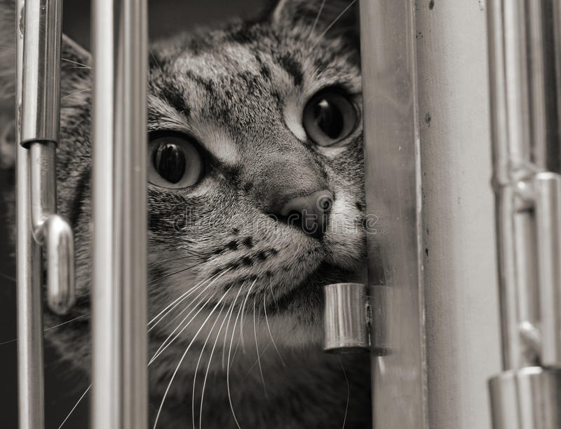 Chat de Tabby dans une cage photo stock