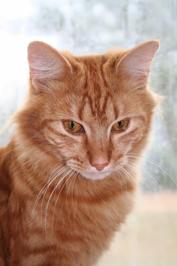 Chat de Tabby orange par l'hublot photo stock