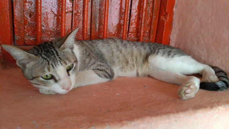 Chat de village et chat à la maison photos stock