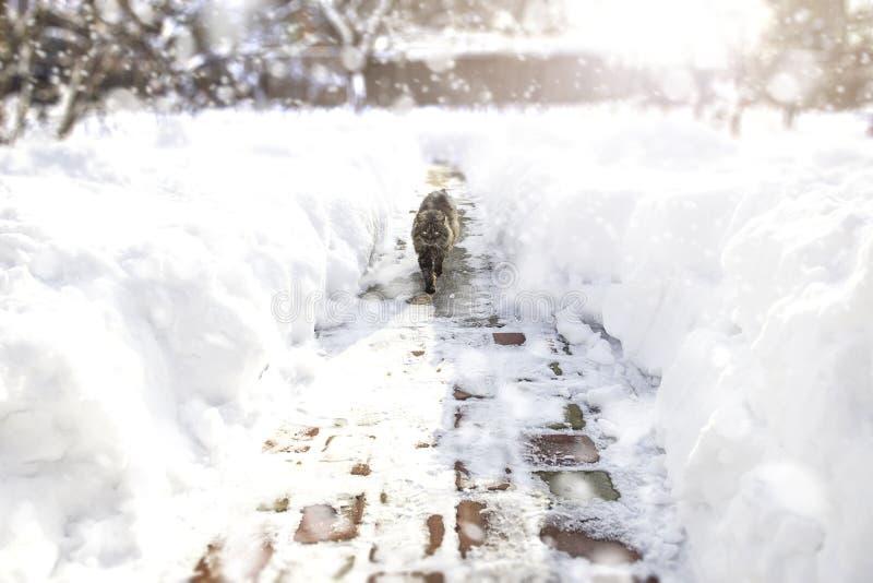 Chat descendant l'allée pendant la tempête de neige Concept de l'hiver images stock