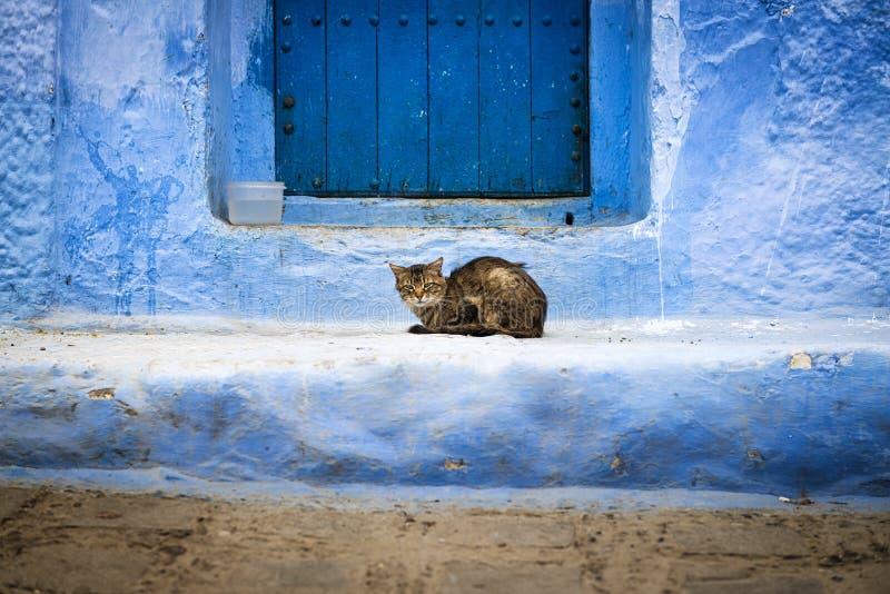 Chat devant une porte dans Chefchaouen, Maroc photo libre de droits