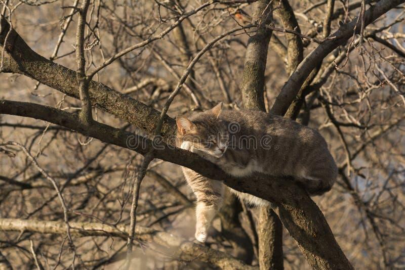 Chat domestique sur l'arbre photos stock