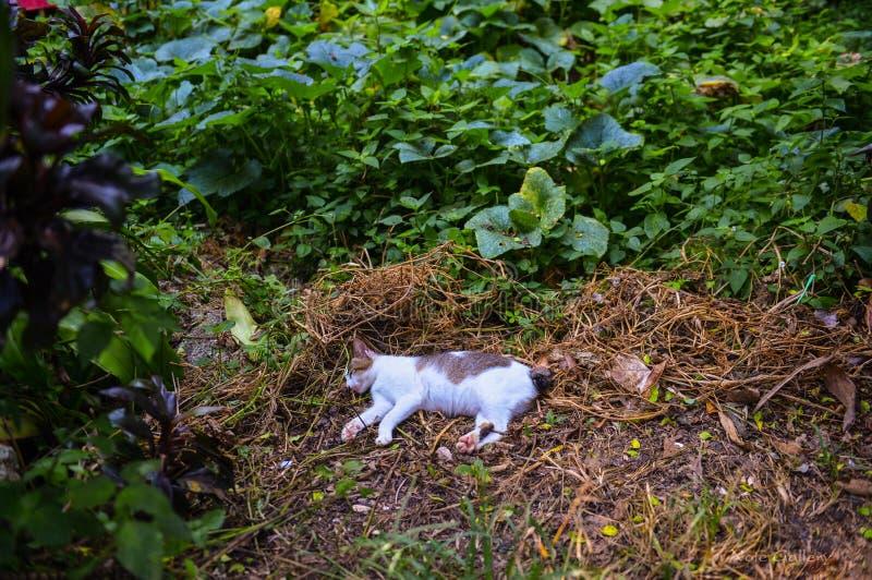 Chat dormant dans la forêt photos libres de droits