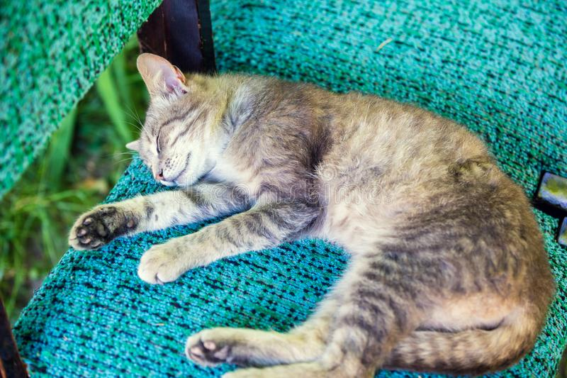 Chat dormant serein sur une chaise images stock
