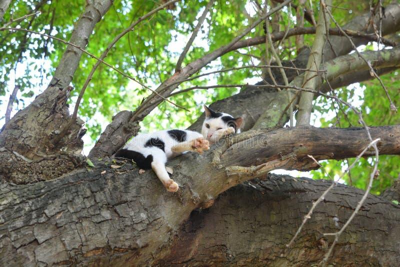 Chat dormant sur l'arbre photo libre de droits
