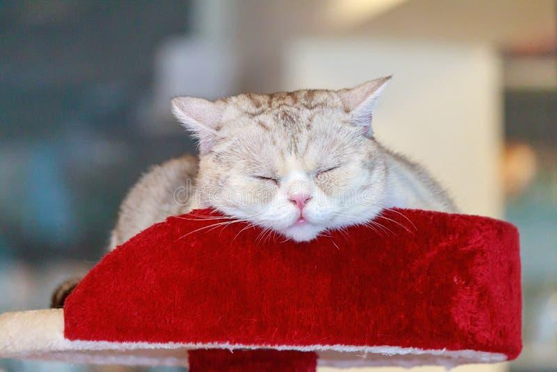 Chat dormant sur le bâti photo stock