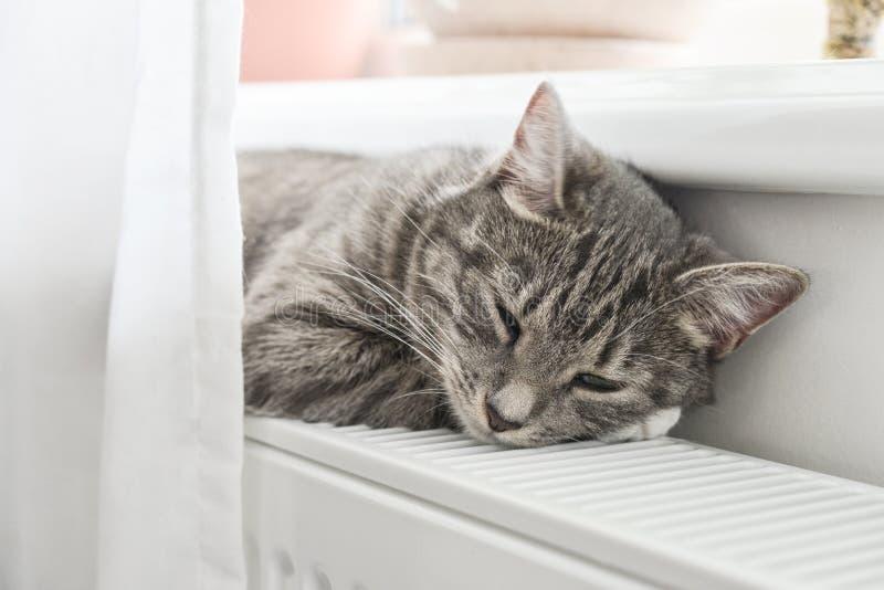 Chat dormant sur le radiateur chaud photographie stock