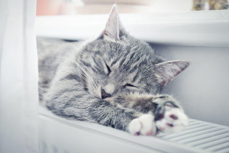 Chat dormant sur le radiateur chaud images stock