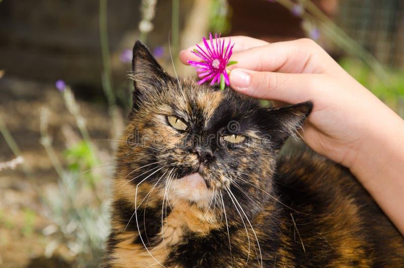 Chat doux avec la fleur rose photo stock