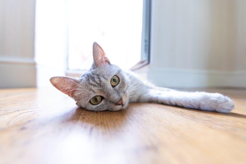 Chat drôle à la maison photographie stock libre de droits