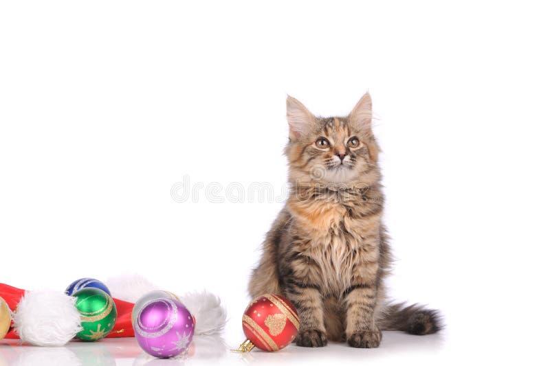 Chat drôle avec des jouets photo libre de droits