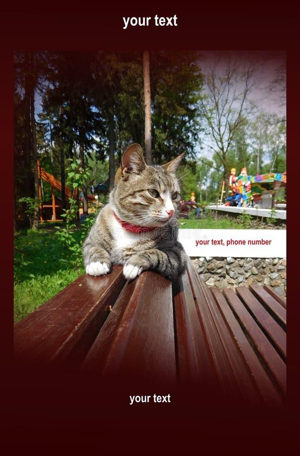 Chat drôle avec une vue importante, fond illustration de vecteur
