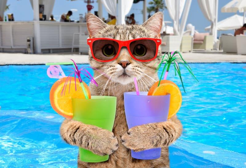 Chat drôle dans des lunettes de soleil avec des cocktails dans des ses pattes image stock