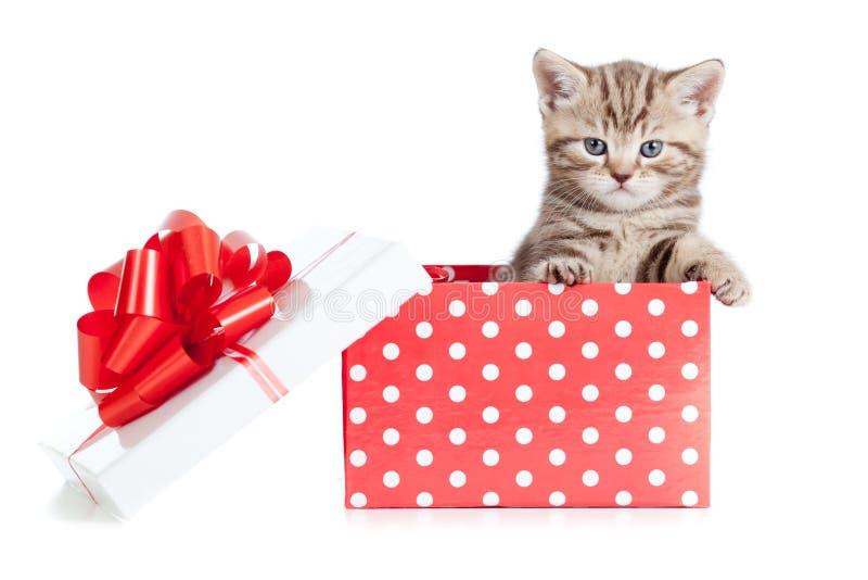 Chat drôle de chéri dans le cadre de cadeau rouge images stock