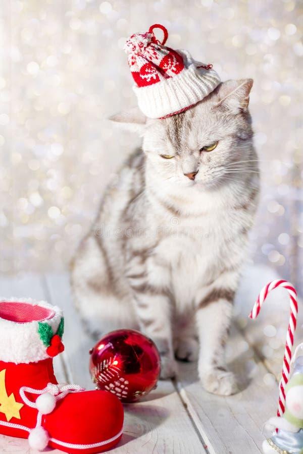 Chat drôle de Noël avec le chapeau de Santa sur des jouets de tête et de Noël photographie stock libre de droits
