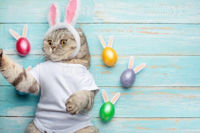 Chat drôle mignon avec des oreilles de lapin, fond de Pâques avec des oeufs Bannière, vue supérieure photo stock