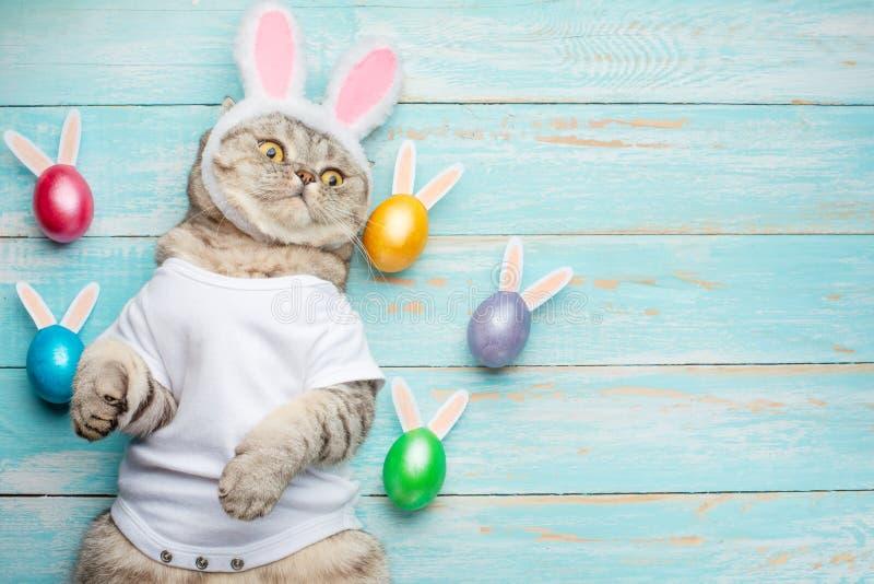 Chat drôle mignon avec des oreilles de lapin, fond de Pâques avec des oeufs Bannière, vue supérieure photos stock