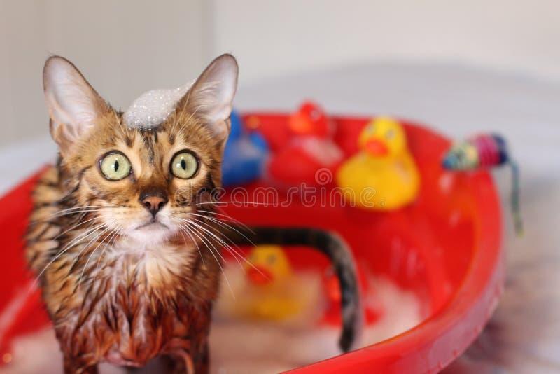 Chat drôle prenant un bain photo stock