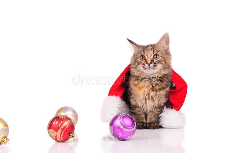Chat drôle avec des jouets de Noël images libres de droits