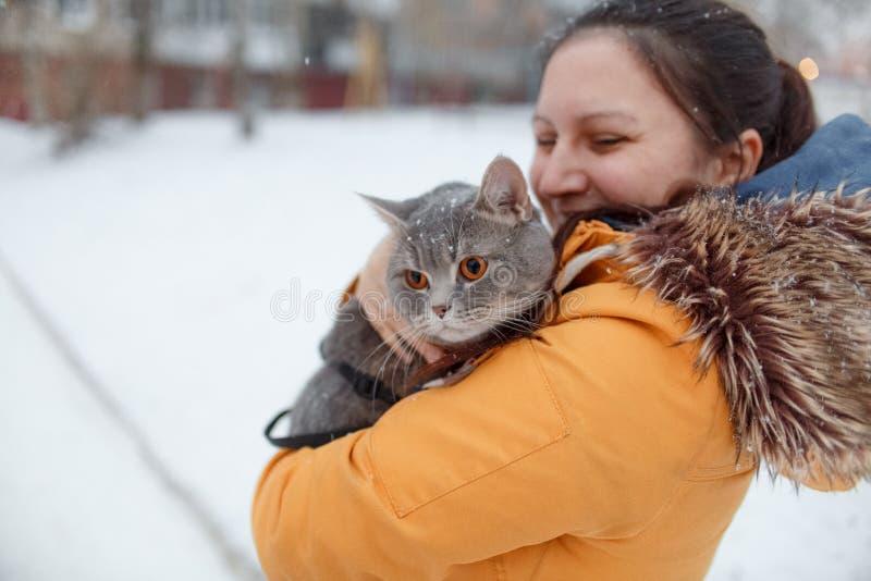 Chat droit écossais pour une promenade pendant l'hiver photographie stock libre de droits
