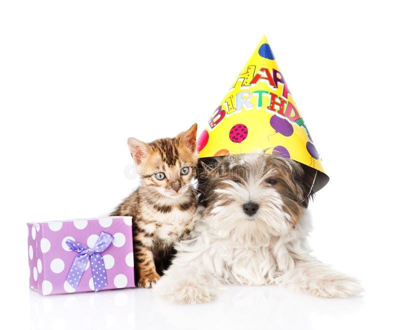 Chat du Bengale et chiot de terrier de Biewer-Yorkshire avec le chapeau d'anniversaire sur le blanc images libres de droits