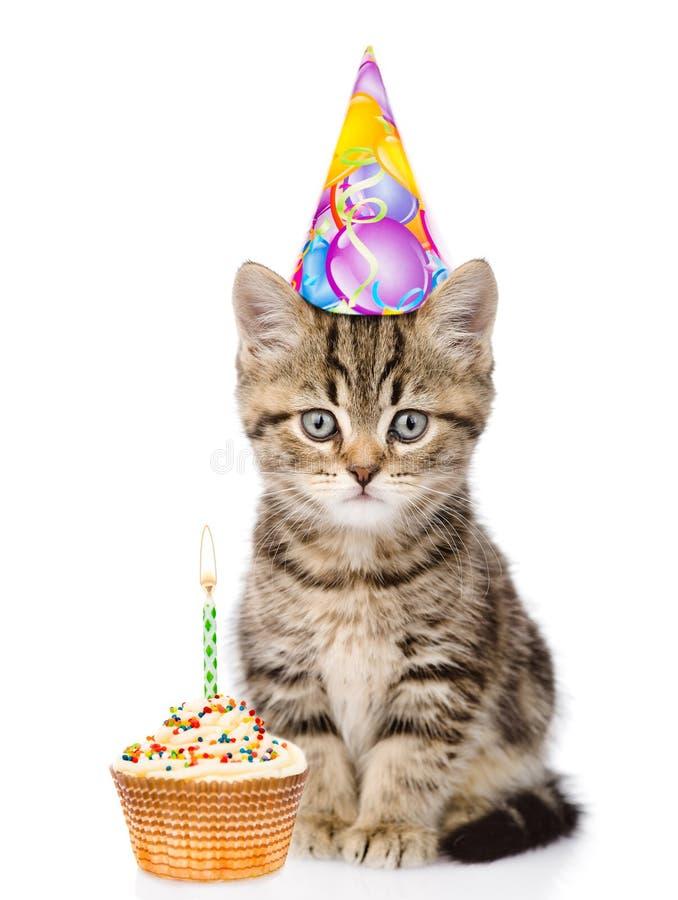 Chat en chapeau et gâteau d'anniversaire regardant l'appareil-photo D'isolement sur le blanc images stock