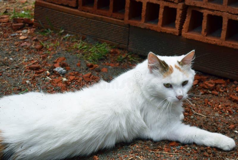 Chat en dehors de fond de brique photo stock