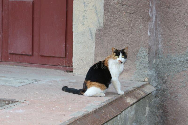 Chat en parc de ville image stock