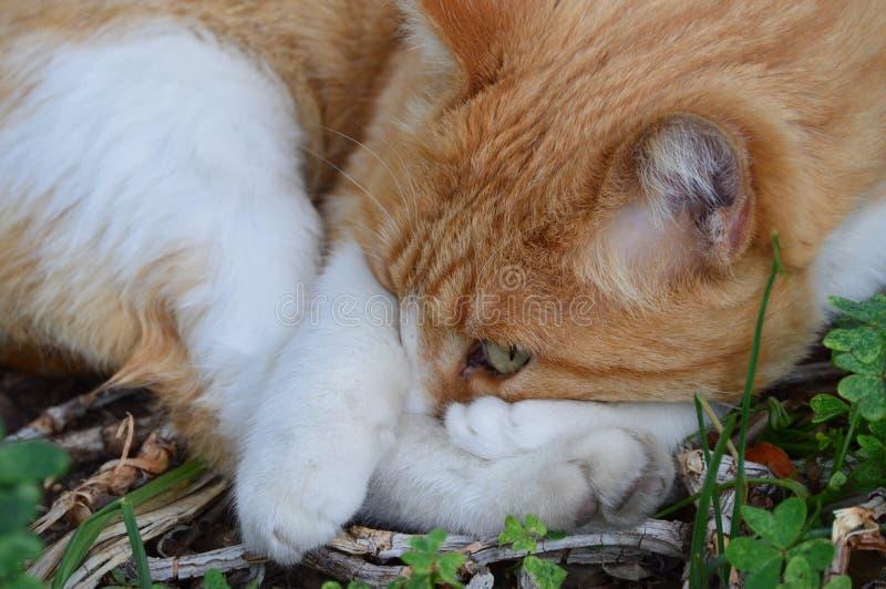 Chat essayant de faire une sieste photographie stock libre de droits