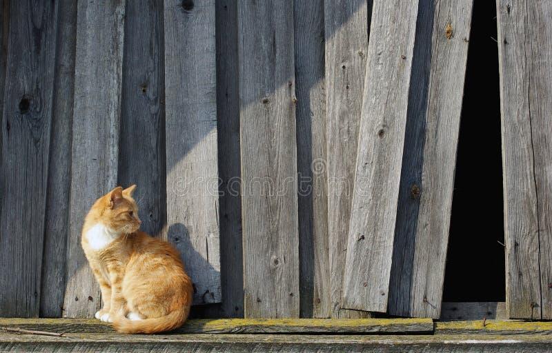 Chat et barrière en bois photographie stock libre de droits