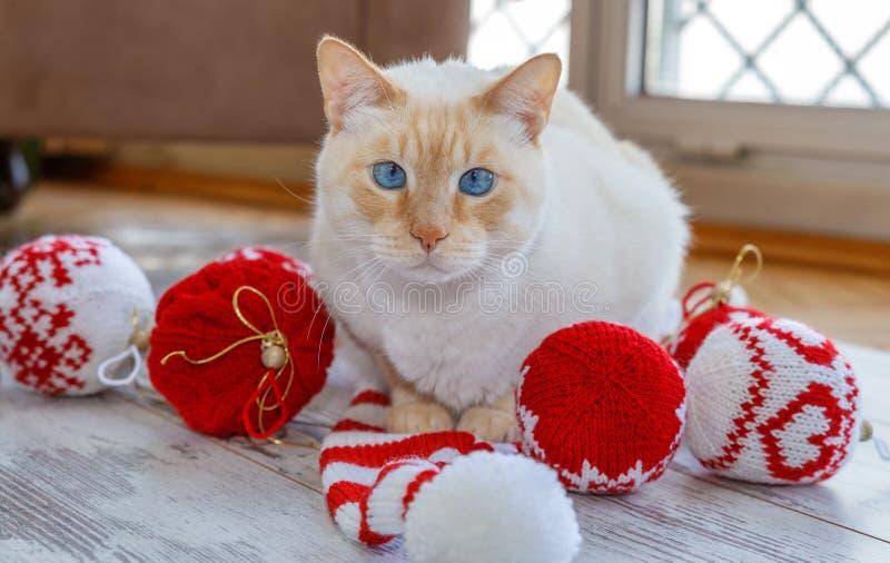 Chat et boules et chapeau de Noël photographie stock