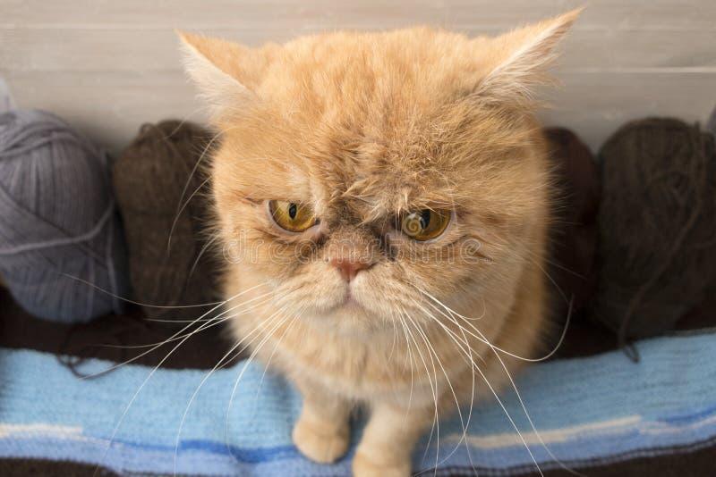 chat et boules pour le tricotage photos libres de droits