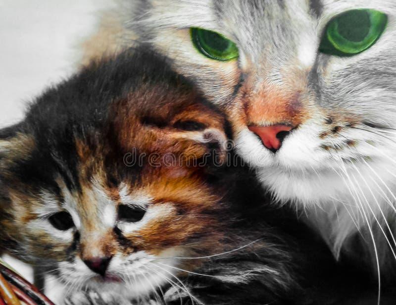 Chat et chaton images libres de droits