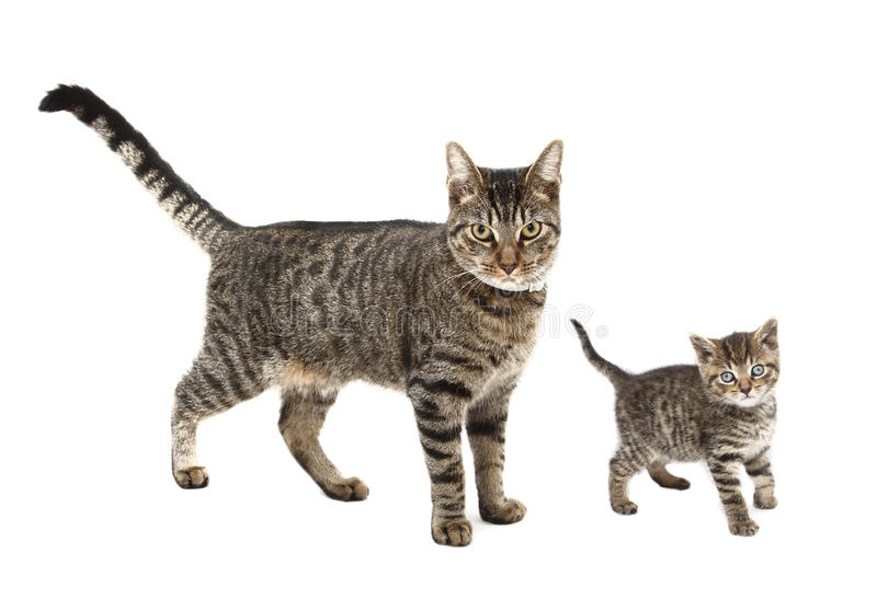 Chat et chaton photographie stock