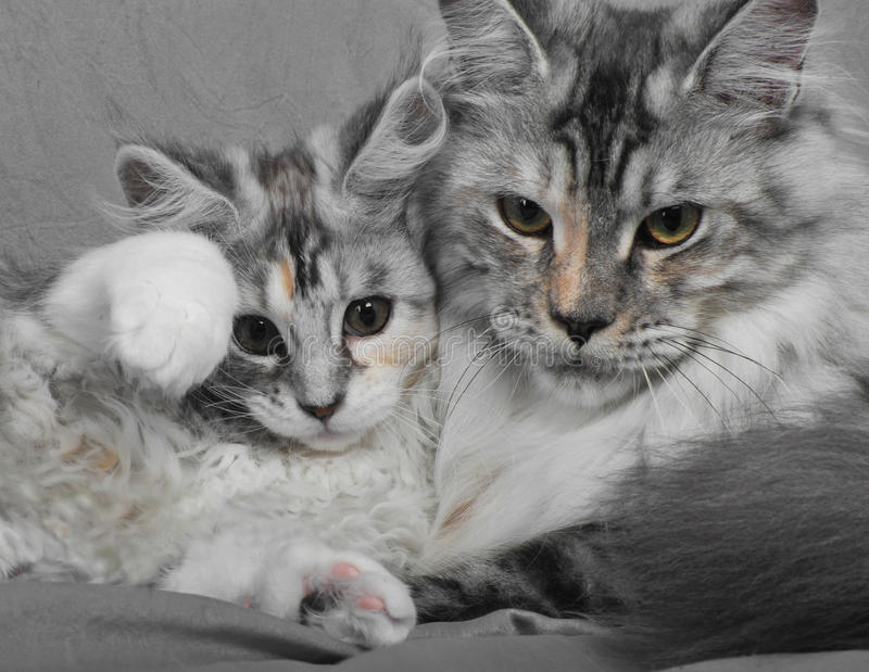 Chat et chaton photos stock