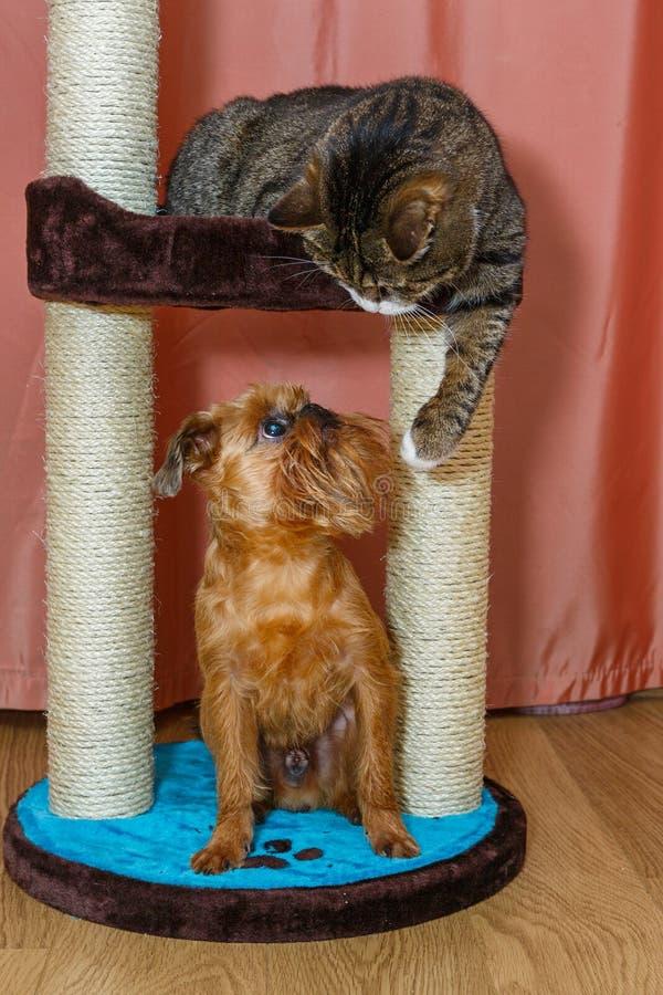 Chat et chien assis sur un poteau à gratter photo libre de droits