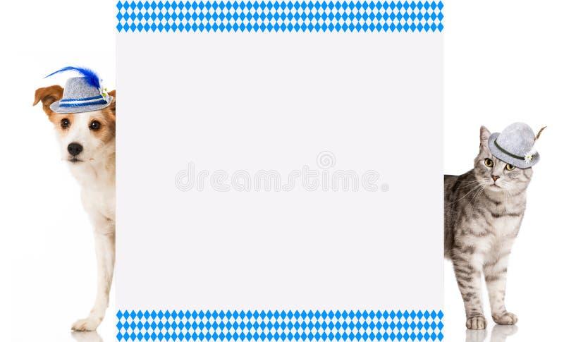 Chat et chien bavarois images libres de droits