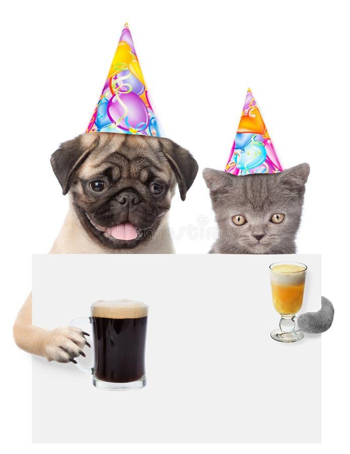 Chat et chien dans des chapeaux d'anniversaire jugeant la bière et le cocktail jetant un coup d'oeil par derrière le conseil vide photos stock