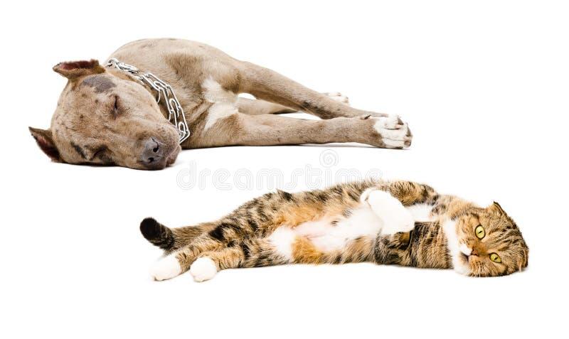 Chat et chien dormant ensemble photo libre de droits
