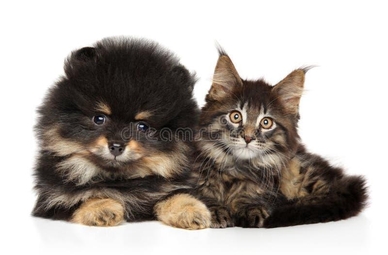 Chat et chien ensemble sur le blanc images stock