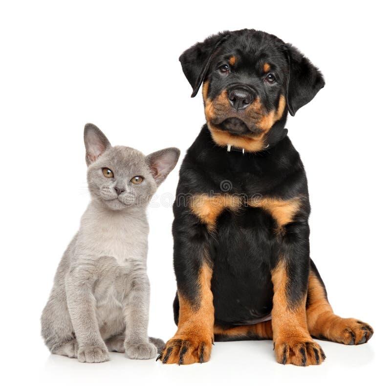 Chat et chien ensemble sur un blanc photo stock